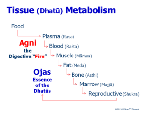 How the Body Metabolism Creates Healthy Tissues