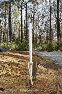 Lamp Post at North Gate