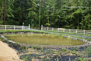Pond on June 15